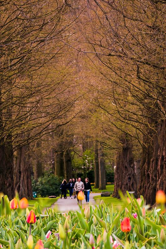 زندگی در هلند - باغ Keukenhof معروف به باغ گلها